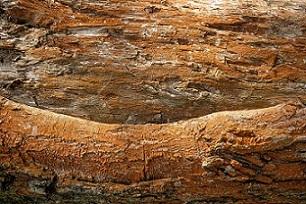 Daños causados por termitas